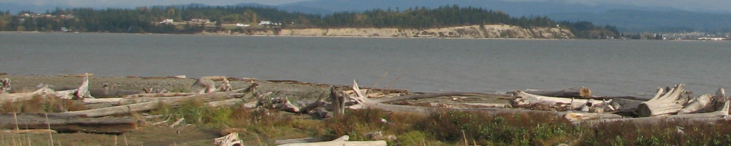 Northwest Driftwood Artists